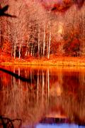 Fall Scenes Photos - Reflecting on Birch by Emily Stauring