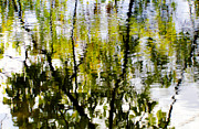 Trees Reflecting In Water Prints - Reflecting on Summer Print by Rachel Cohen