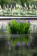Iris Digital Art Prints - Reflecting Pond II Print by Suzanne Gaff