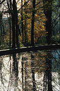 Reflecting Water Prints - Reflecting Pool And Oaks At Theodore Print by Raymond Gehman