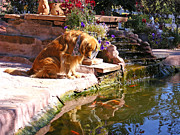 Golden Settings Pet Photography Photos - Reflecting Pool by Kara Kincade