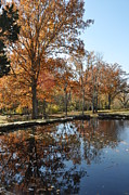 Cheekwood Prints - Reflection in the water Print by Denise Ellis