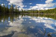 Reflection Of Trees In Lake Prints - Reflection In Water, Kananaskis, Alberta Print by Philippe Widling