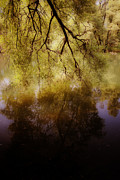 Yellow. Leaves Prints - Reflection Print by Joana Kruse
