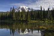 Mt Rainier National Park Art - Reflection Lake And Mount Rainier by Konrad Wothe