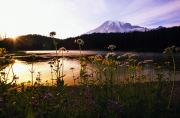 Evening Scenes Framed Prints - Reflection Lake With Mt. Hood In The Framed Print by Natural Selection Craig Tuttle