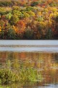 Calm Waters Posters - Reflection Of Autumn Colors In A Lake Poster by Susan Dykstra