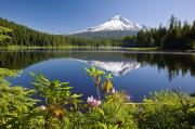 Reflection Of Trees In Lake Prints - Reflection Of Mount Hood In Trillium Print by Craig Tuttle