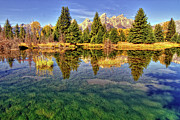 Grand Teton Framed Prints - Reflection Of Trees Framed Print by David Hensley
