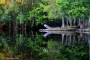 Florida Waterscape Originals - Reflection off the Withlacoochee River by Barbara Bowen