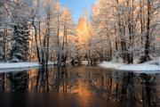 White River Scene Photo Originals - Reflection trees with sunlight by Romeo Koitmae