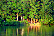 Pond Greeting Cards Digital Art - Reflections At Farrington Lake 6 by Adam Shevron