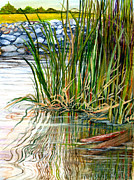 Reeds Paintings - Reflections by Elaine Hodges