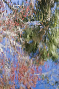 Reflections In The Hillsborough River Print by John Arnaldi