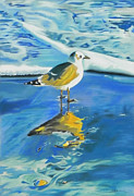 Seagull Pastels Posters - Reflections in the Sand Poster by Paul Miners