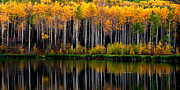 Fall Pyrography Metal Prints - Reflections of Aspen Colorado Metal Print by David Blankenship