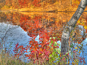Red Leaf Prints - Reflections of Autumn VI Print by Jimmy Ostgard