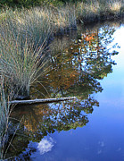 Water Reflections Photos - Reflections Of Broad Creek by Sari Sauls