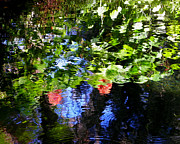 Dunnellon Prints - Reflections of Fall in the Spring Print by Judy Wanamaker