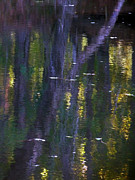 Reflections Of Monet Print by Terry Eve Tanner
