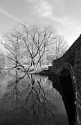 Fdr Prints - Reflections of Natural Beauty Print by Andrew Dinh