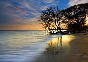 Sunset Art - Reflections of PAradise by Mike  Dawson