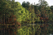 South Carolina Prints - Reflections Of Trees On Pool D Print by Raymond Gehman