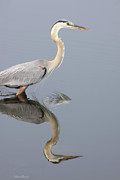 Blue Heron Prints - Reflections Of You Print by Deborah Benoit
