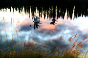 Reflection Digital Art - Reflections off mountain pond in British Columbia by Mark Duffy