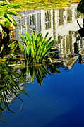Bergen Posters - Reflections On A Lily Pond #3 Poster by Paul Causie