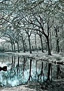 Woods Photos - Reflections by Photodream Art
