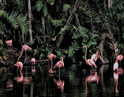 Flamingoes Art - Reflections by Sandy Poore