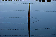 Water Reflections Photos - Reflections by Grebo Gray