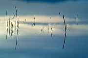 Water Abstracts Prints - Reflexions Blue Print by Guido Montanes Castillo