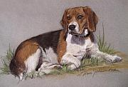 Pictures Of Dogs  Prints - Regal Beagle Print by L Diane Johnson