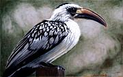 Africa Pastels Framed Prints - Regal Hornbill Framed Print by Carol McCarty