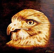 Hawk Pyrography - Regal by Jo Schwartz