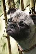 Dog Portrait Digital Art Originals - Reggie by Kathi Ganong