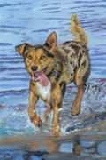 Kelpie Paintings - Reggie Portrait of a Working Dog by Kellie Straw