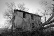 Old Houses Metal Prints - Regrowth Metal Print by Amanda Barcon
