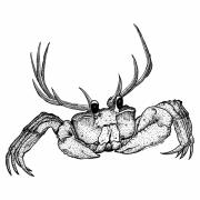 Odd Drawings Prints - Reincrab Print by Karl Addison