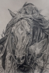 Horse Drawings Acrylic Prints - Reiner Acrylic Print by Jana Goode