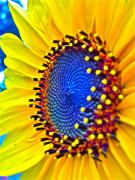 Sunflower Prints - Rejoice Print by Gwyn Newcombe