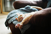 Wool Prints - Relaxing Cat Print by Image(s) by Sara Lynn Paige