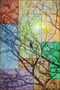 Multicolor Framed Prints - Relaxing In A Tree Framed Print by Tom York