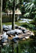 Alligators Photos - Relaxing in the Swimming Hole by Sheryl Unwin