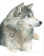 Wildlife Art Drawings Posters - Relaxing Wolf Poster by Carla Kurt