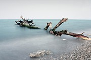 Driftwood Framed Prints - Remains Of Flood At Mouth Of Salinello. Framed Print by Marco Equizi