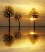 Reflections Photos - Remains of the Day by Photodream Art