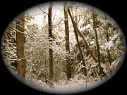 Macro Photography - Remembering Narnia by Lynn-Marie Gildersleeve